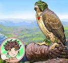 Huấn luyện chim ưng